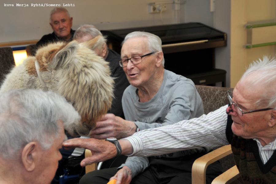 eläin alpakka Sirpa Ryyppö vanhus vanhukset miehet Lamminniemikoti vierailu